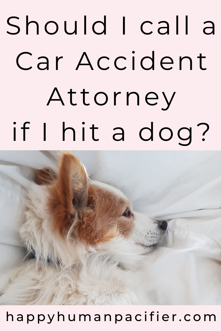 What are your legal obligations if you run over a dog and the dog dies? Do you need to call a car accident attorney? Who is liable for the vet bills? Find out in this post. #hitadog #dogcaraccident #caraccidentattorney