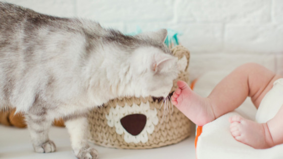 how to introduce my cat to a baby